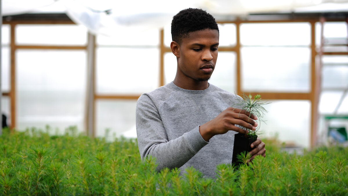 A CNR student works in a greenhouse.